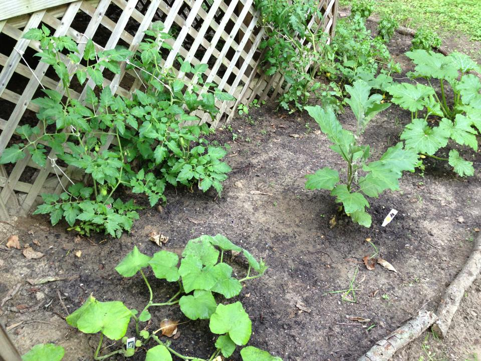 4 Poison Ivy, Oak, and Sumac Counseling Points