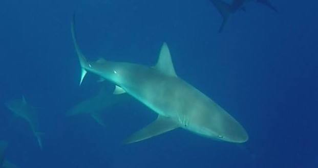 5 Ways Sharks Can Advance Human Medicine
