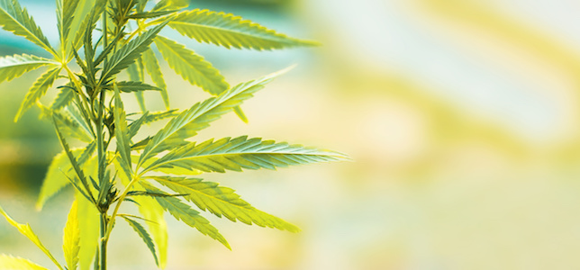 Resource Designed to Assist Pharmacists With CBD Products