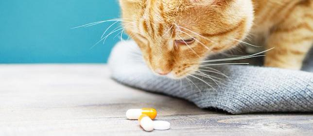 Survey Asks Pharmacists About Potential Pet Poisons