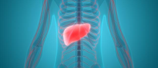 Study: Potential Targets Identified for Inhibiting Liver Disease Progression