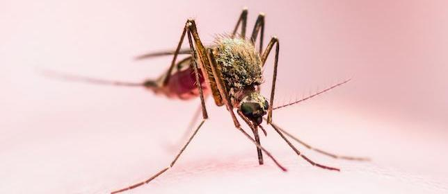 CDC: Rise in US Malaria Rate May Be Linked to Increase in International Travel