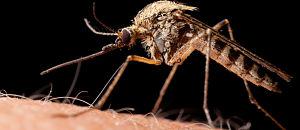Pharmacy Association Launches Zika Virus Education Initiative